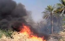آتشسوزی مزارع و نخلستان در روستای بلیلی + فیلم