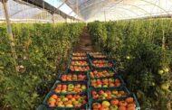 ۲۵۰ میلیون دلار تعهد صادراتی برای محصولات خارج از فصل